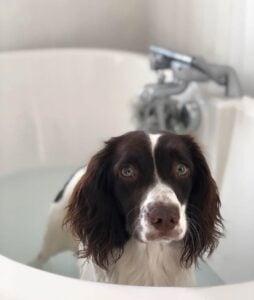 type of shampoo do dog groomers use