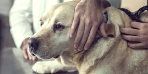 What Happens After Euthanization?