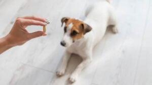 Conclusion For Apoquel vs Benadryl for Dogs