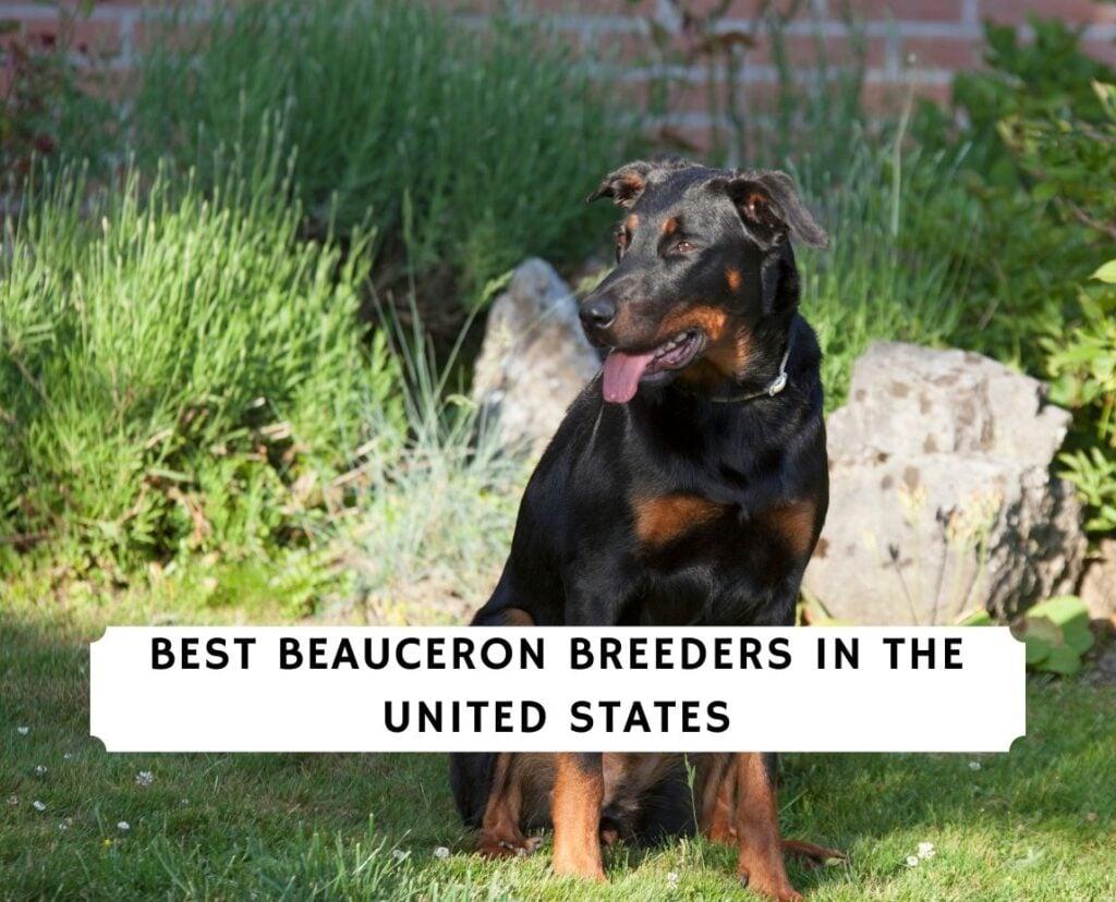Beauceron Breeders