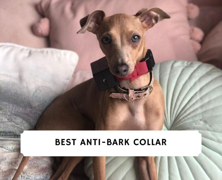 Best Anti-Bark Collar