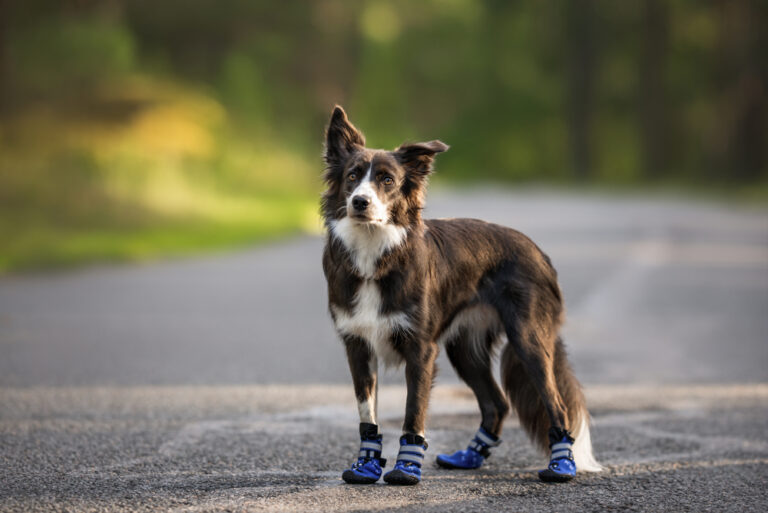 Best Dog Boots For Hot Pavement