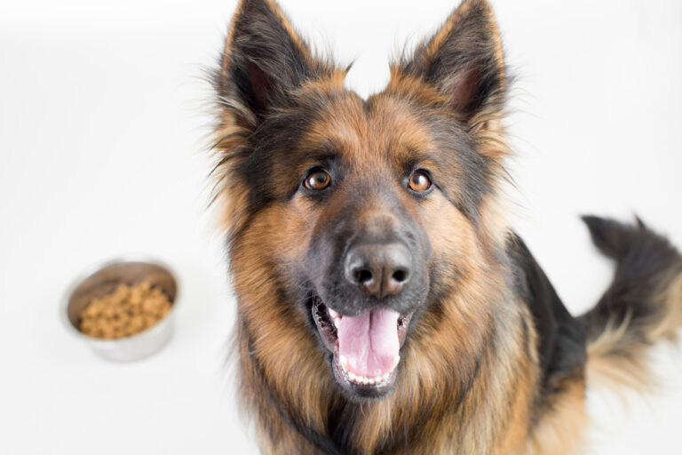 Best Food For German Shepherd To Gain Weight