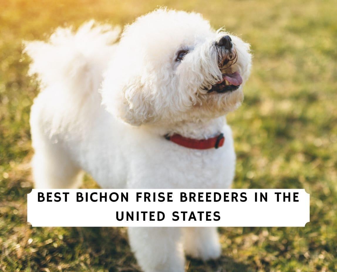 Bichon Frise Breeders