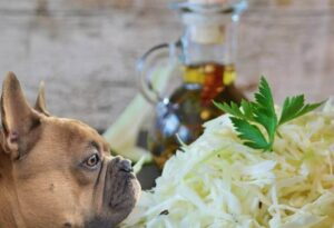 Can Dogs Eat Coleslaw?