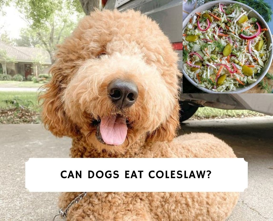 Can Dogs Eat Coleslaw