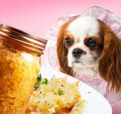 Dog ate coleslaw