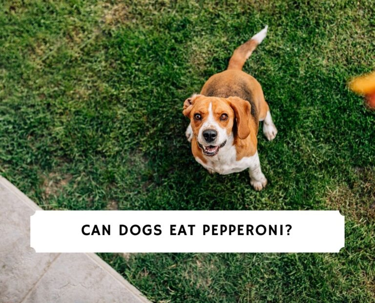 Can Dogs Eat Pepperoni