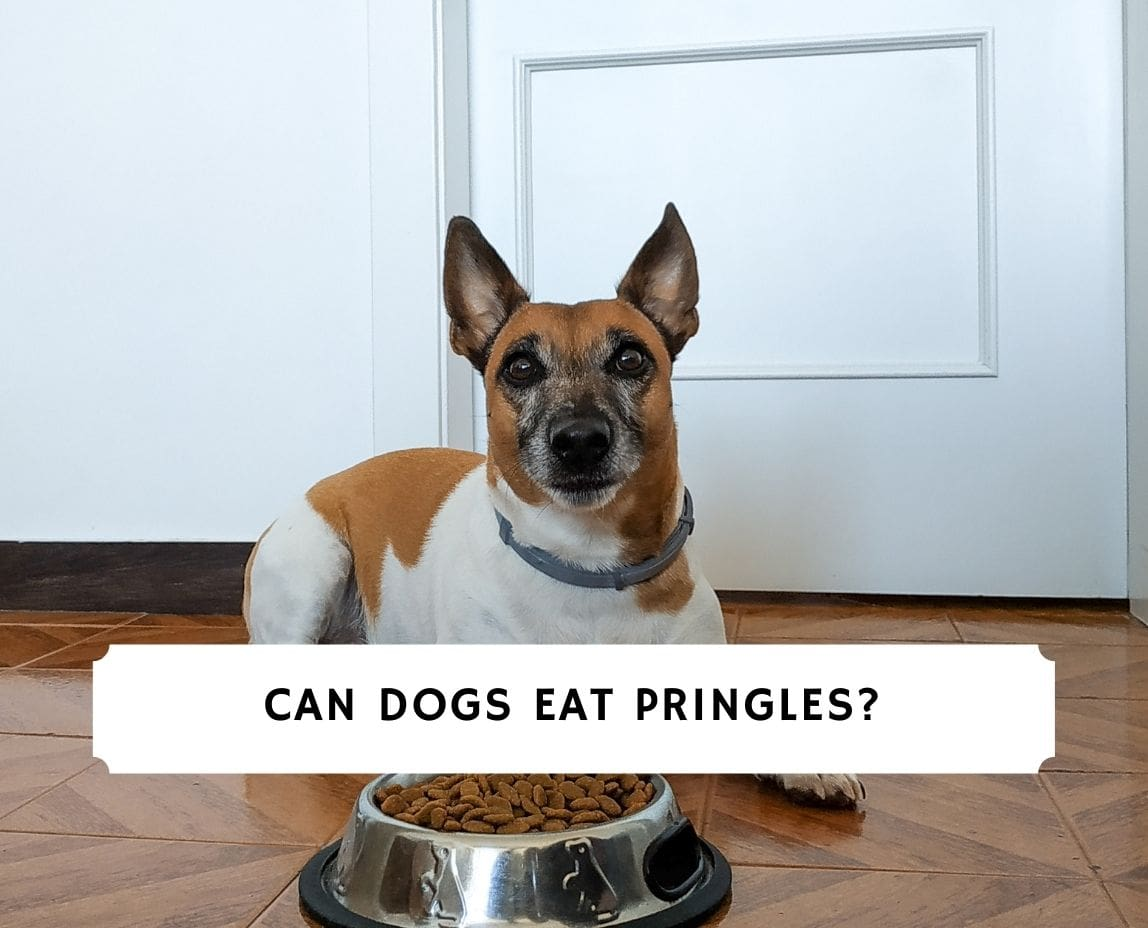 Can Dogs Eat Pringles