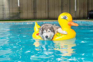 Caring For Your Dog In The Water