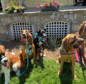 Conclusion For The Best Bloodhound Breeders in the United States