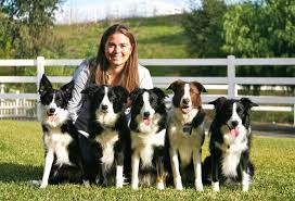 Contact Point Border Collies
