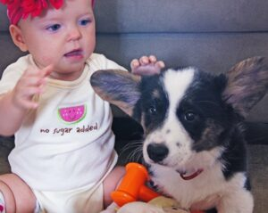 Corgis are Great with Kids