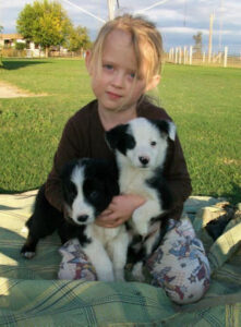 Cutters Quarters Border Collies