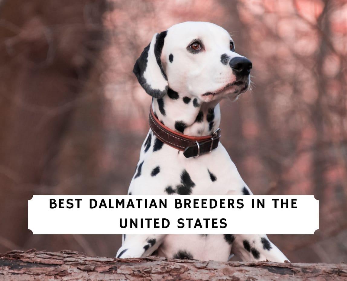 Dalmatian Breeders