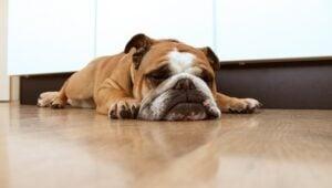 Dangers of Sleeping on the Floor