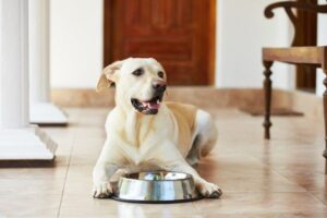 Food For All Ages Stages of Your Dog's Life