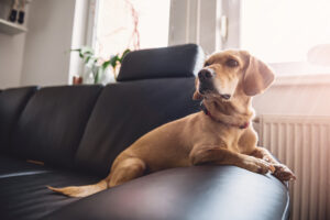 How to Keep Your Dog Entertained While Alone