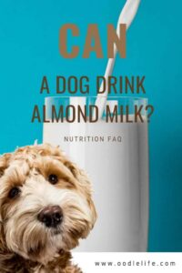 How to Serve Almond Milk to Your Dog