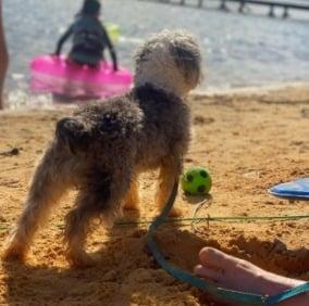 Premier Pups