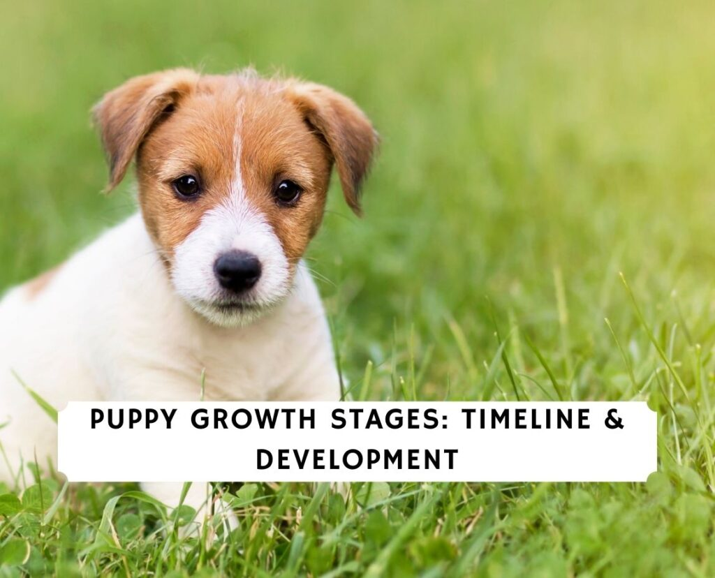 Puppy Growth Stages