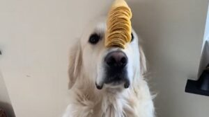 Conclusion For Can Dogs Eat Pringles
