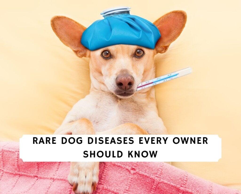 Rare Dog Diseases