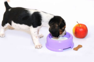 Should Milk be Included in a Dog's Diet