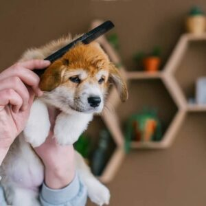 Ways to Reduce or Manage the Corgi Shedding