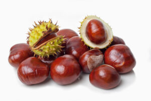 What Is a Chestnut