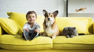 What are The Disadvantages of Raising a Child with a Corgi?