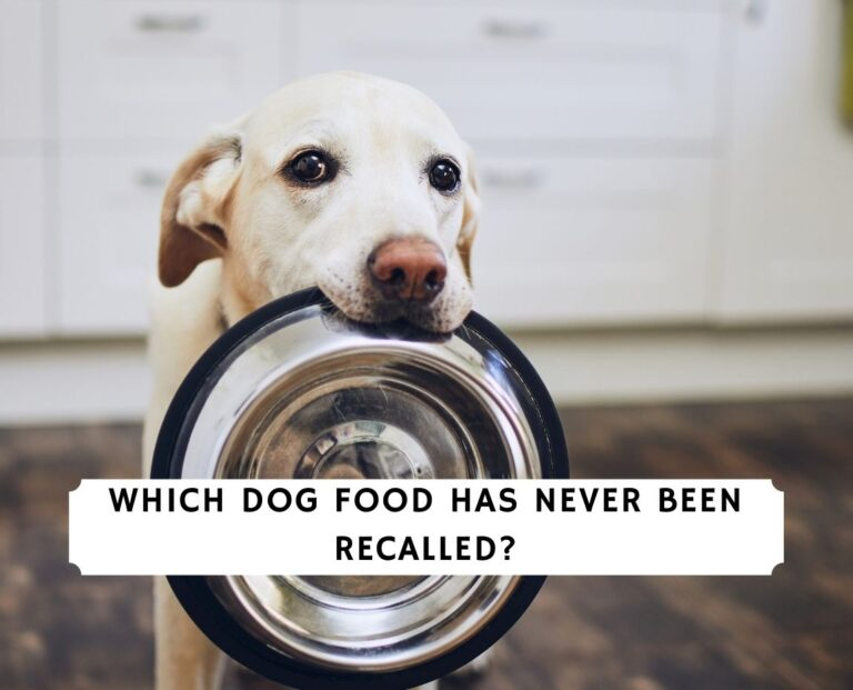 Which Dog Food Has Never Been Recalled