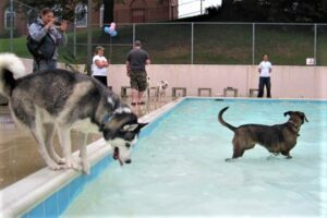 Why Can't Huskies Swim