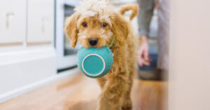 Why Do Hypoallergenic Dogs Help with Pet Allergies