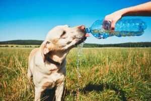 Conclusion For Can Dogs Drink Distilled Water