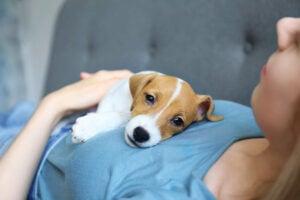 Dog Affection