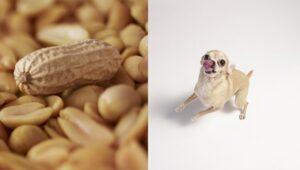 Why Don't Dogs Eat Nuts?