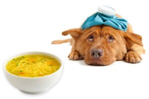 Can Dogs Consume Chicken Noodle Soup