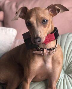e-collar for barking