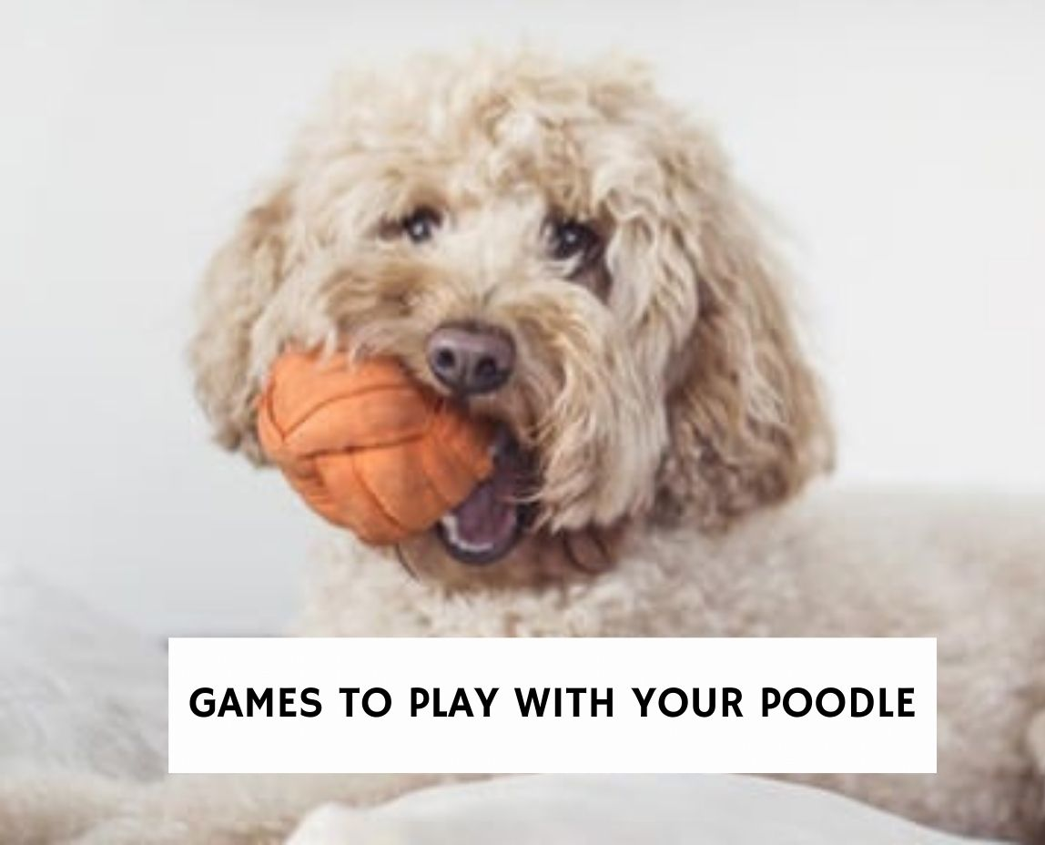 Games to Play With Your Poodle