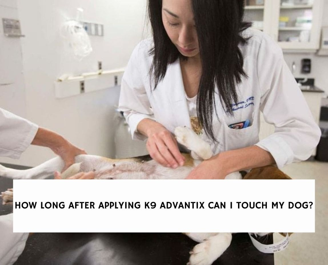 How Long After Applying K9 Advantix Can I Touch My Dog?