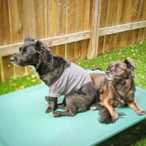 waterproof outdoor dog bed