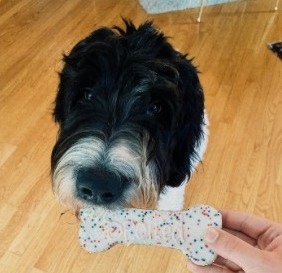 Are Newfiedoodle Dogs Hypoallergenic