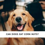Can Dogs Eat Corn Nuts