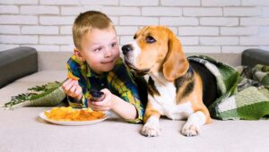 Is it Safe For Dogs To Eat Hot Chips