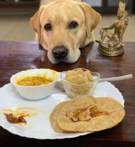 Can Dogs Eat Pita Bread