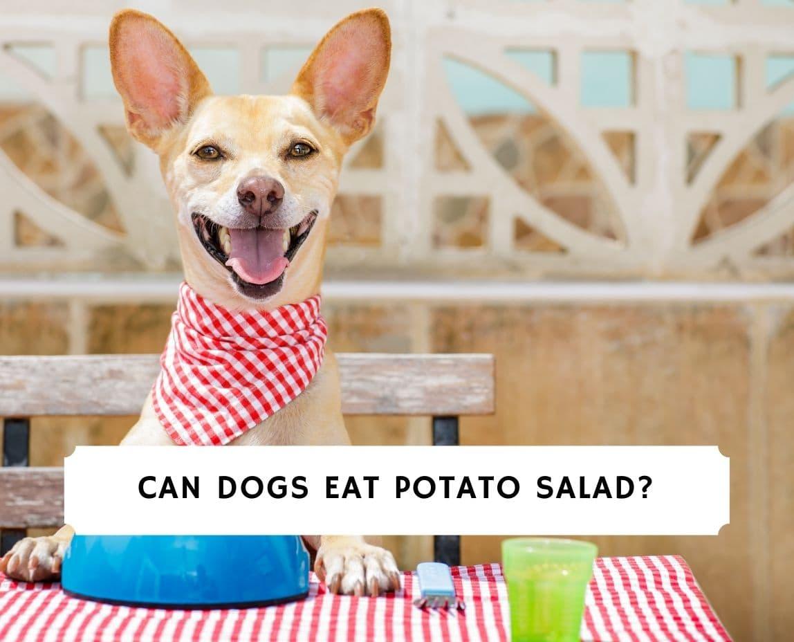 Can Dogs Eat Potato Salad
