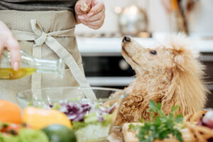 Is it Safe For Dogs to Consume Sesame Oil
