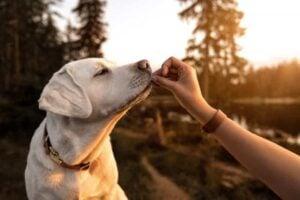 Dangerous Heat in Chips For Dogs