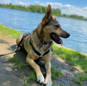 Heart-Healthy FatsFor Dogs